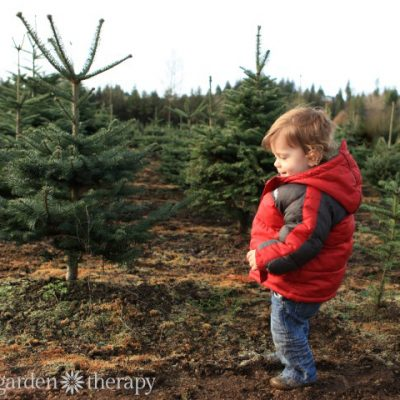 Know Your Tree! How to Choose the Right Fresh Christmas Tree for Your Family