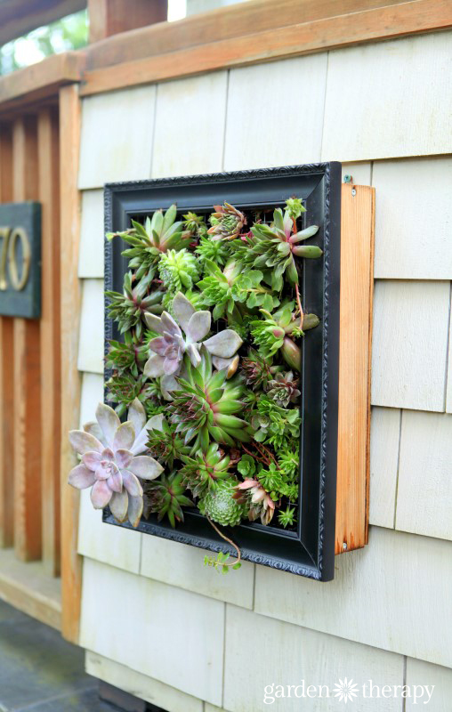 Living Outdoor Art a framed succulent planter from the book Garden Made