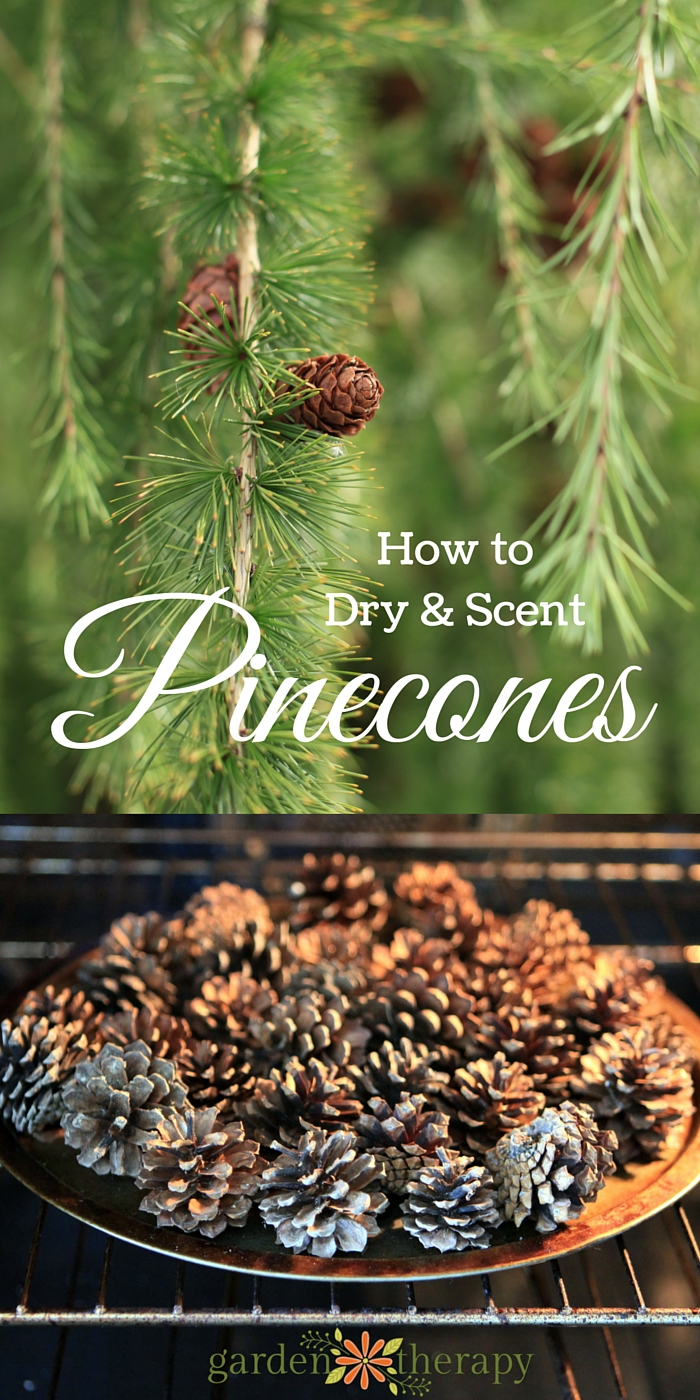 Make Scented Pinecones For A Pretty Home Diffuser And A Bunch Of Other Crafty Ideas