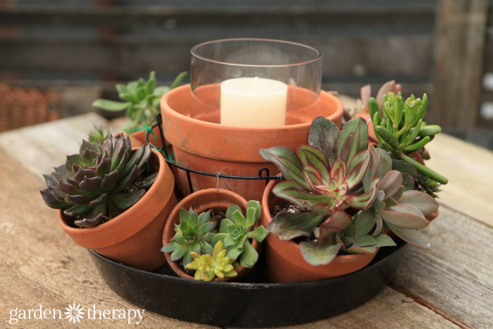 Make a DIY Succulent table centerpiece