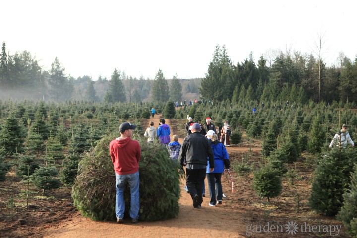 Pick the Right Christmas Tree for your Home