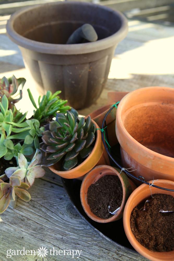 Planting the multi pot centerpiece