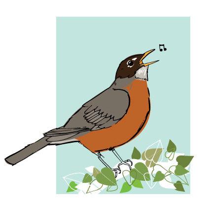 Backyard Birds: Robin