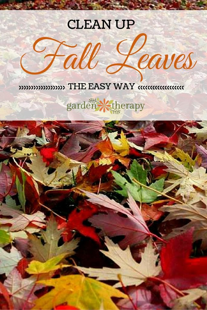The EASY way to clean up fall leaves from your yard and garden