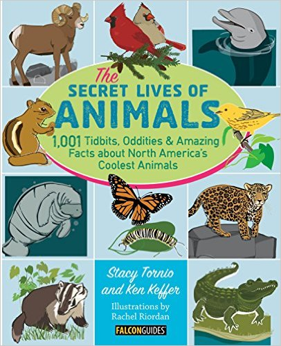 The Secret Lives of Animals Book