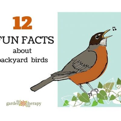 Get to Know Your Backyard Birds with These Fun Facts