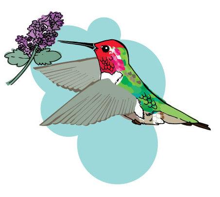 Backyard birds: ruby throated hummngbird