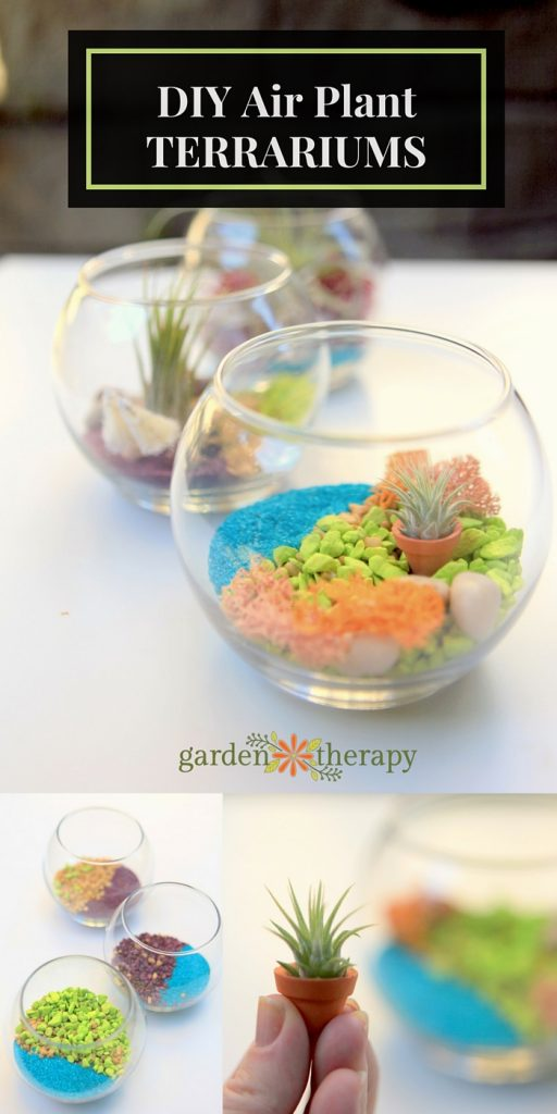 DIY Air Plant TERRARIUMS