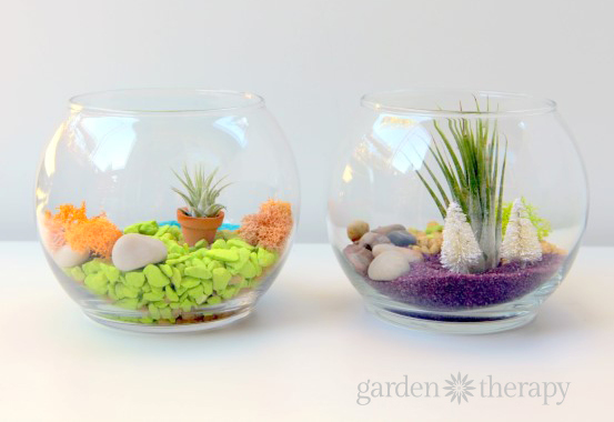 Tint Terrarium Projects