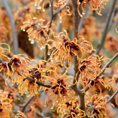 Check Out These Cool Characters! The Top Plants for Winter Garden Interest