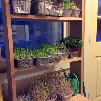 Year-Round Salad Gardening: How to Build an Indoor Plant Shelf