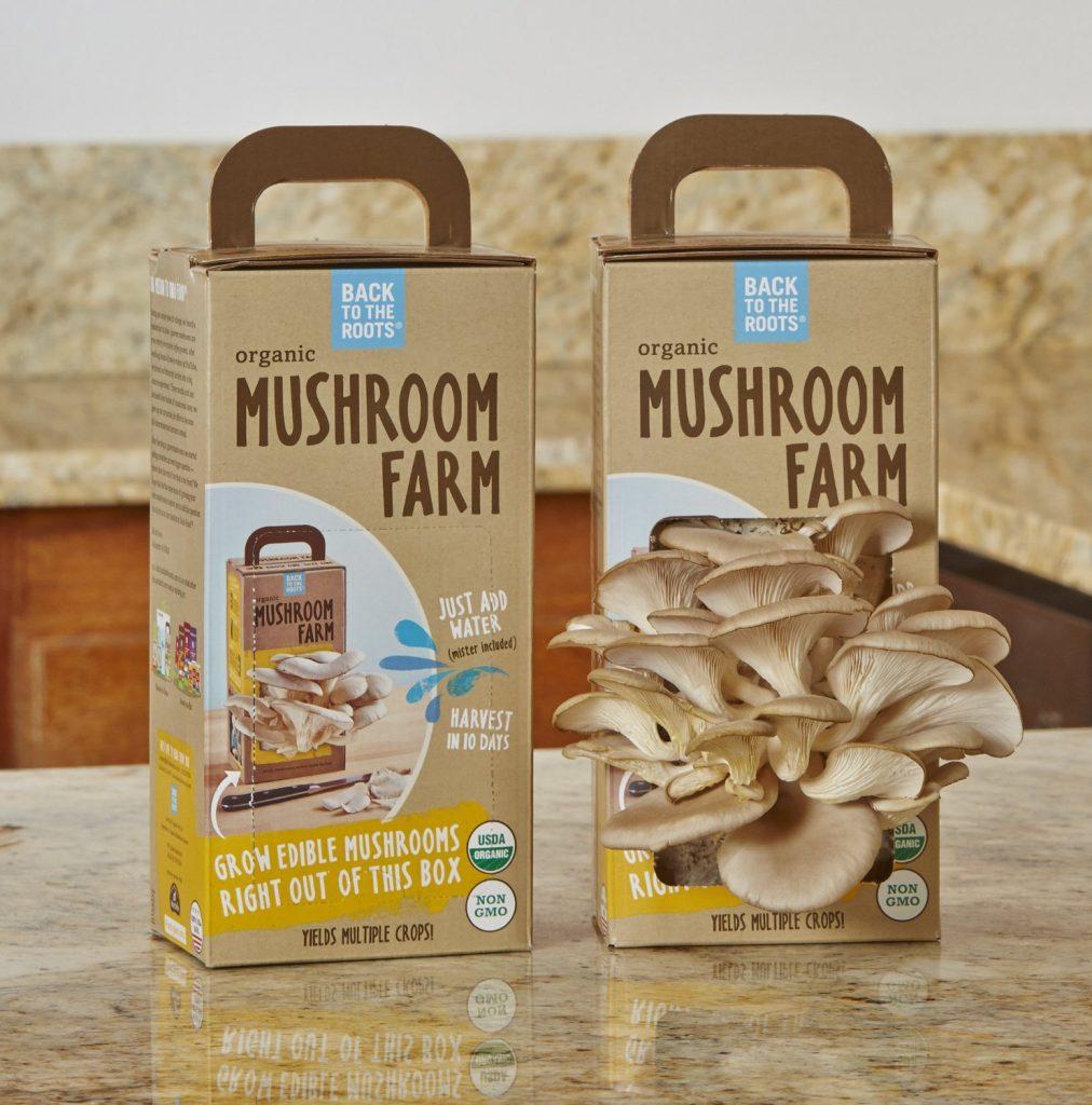 Mushroom Kits and more creative gift ideas