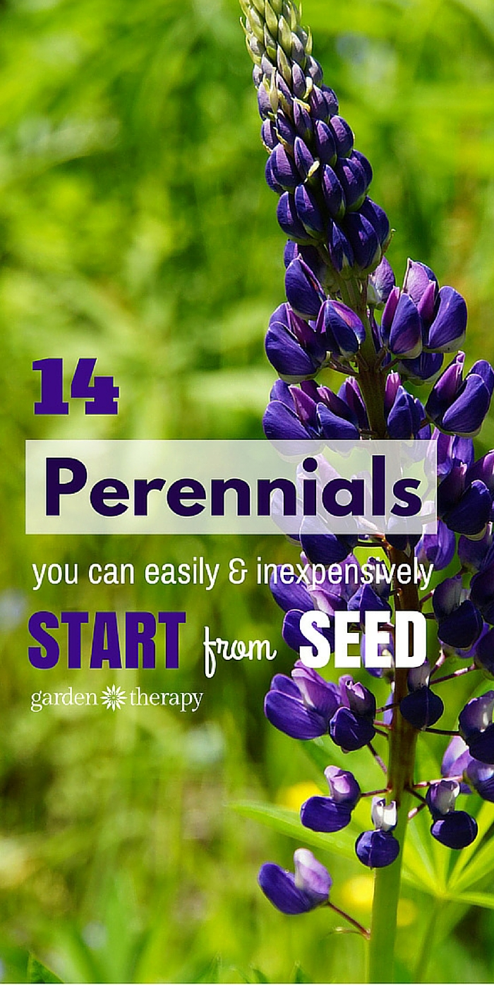 14 perennials you can easily start from seeds