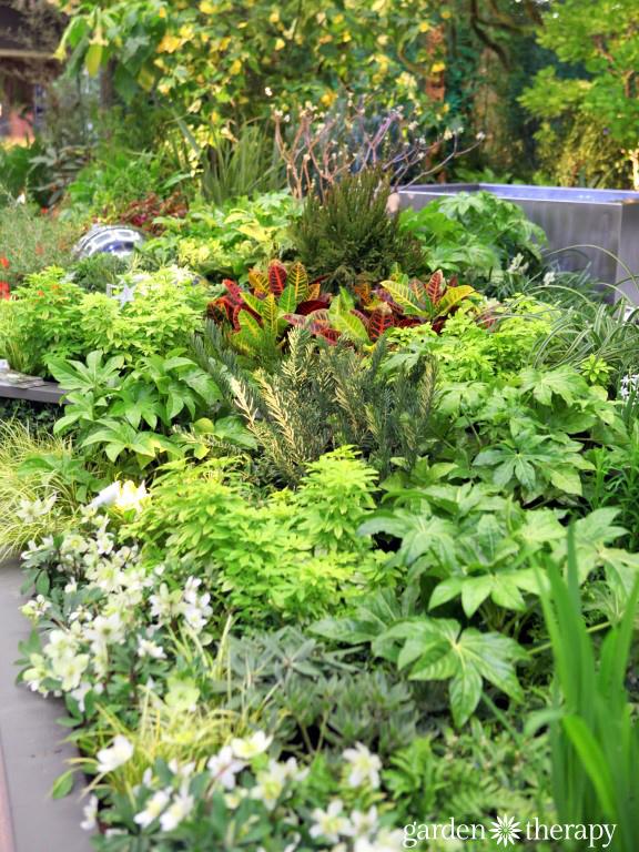 Garden Design with hellebores