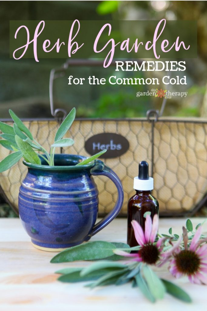 Herb Garden Remedies for the Common Cold. Echinacea, sage, and more