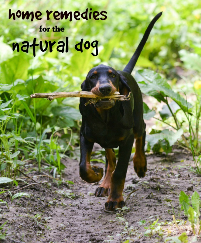 Home Remedies for the Natural Dog