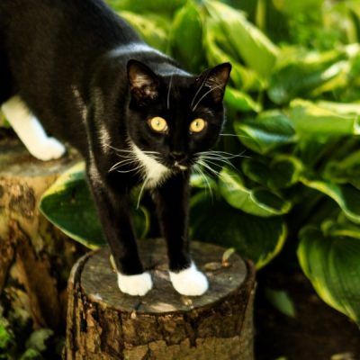 20 Cat-Safe Houseplants to Fill Your Pet-Friendly Home