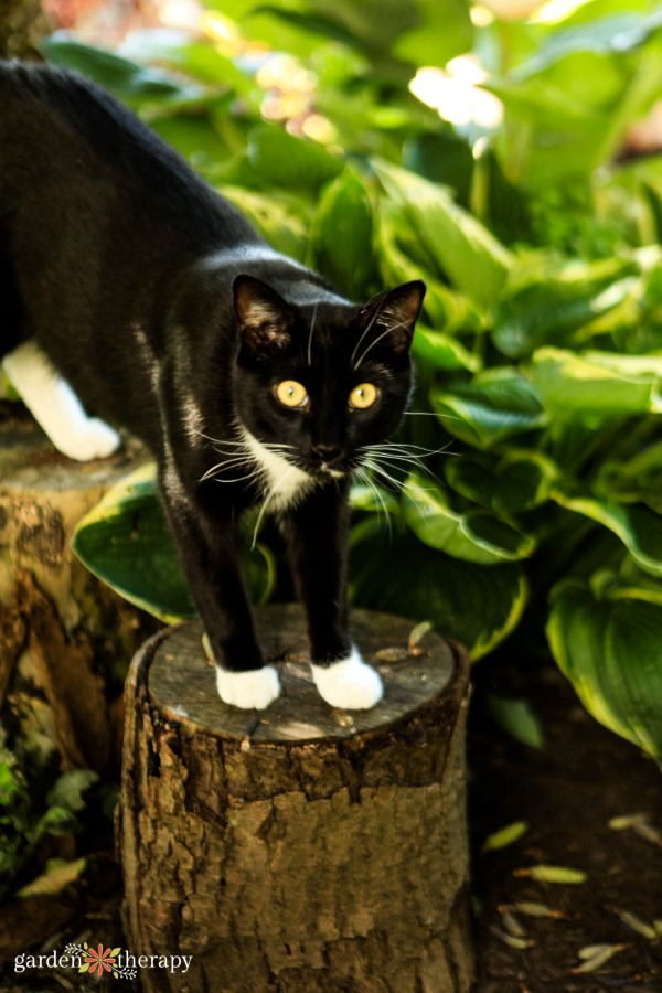 cat standing next to house plants