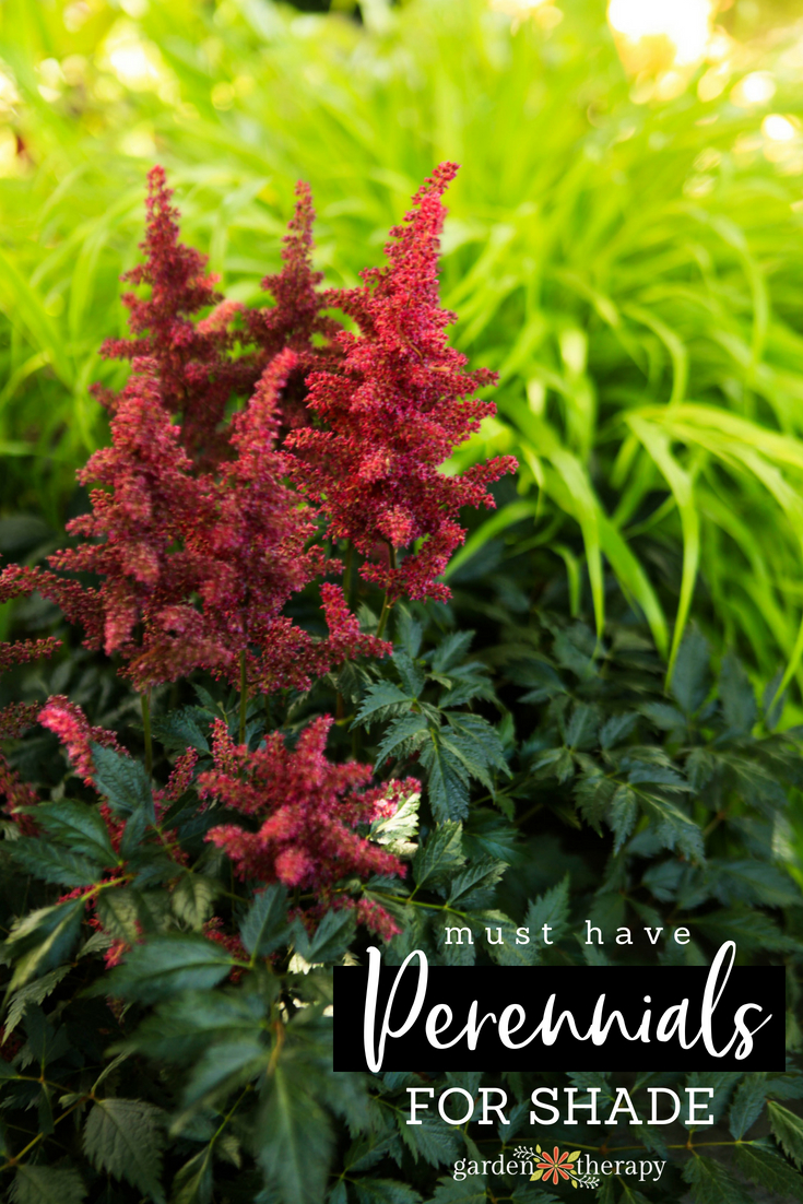 must-have perennials for shade