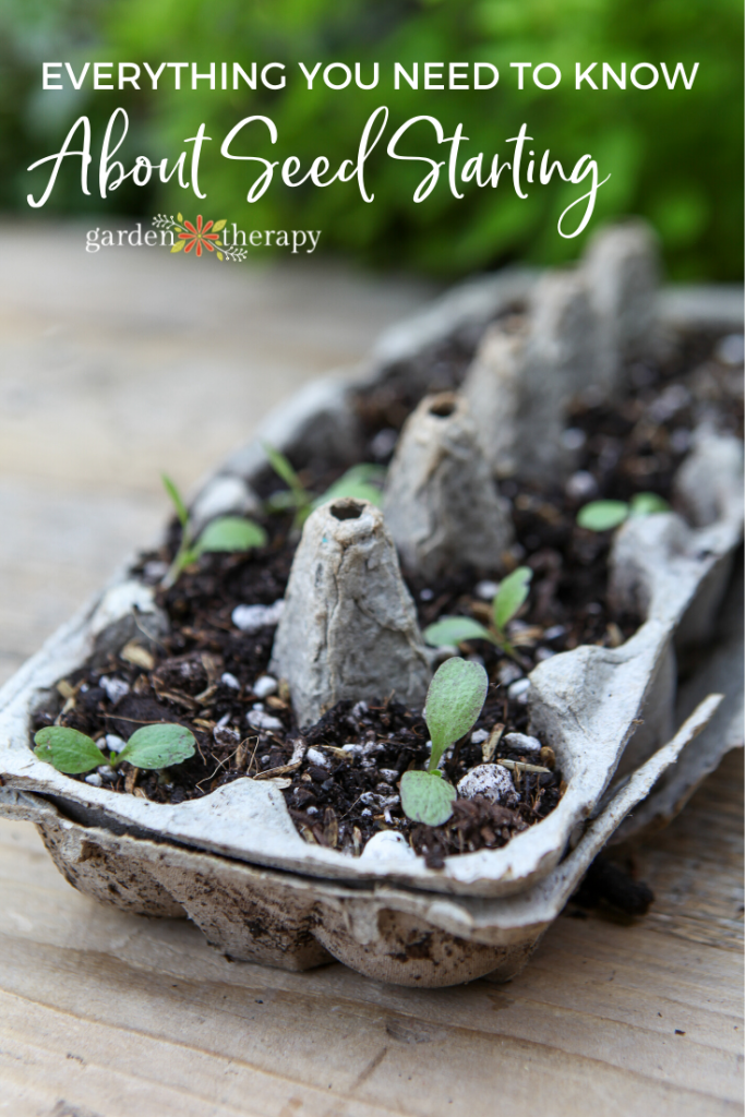 Egg carton with seedlings and soil