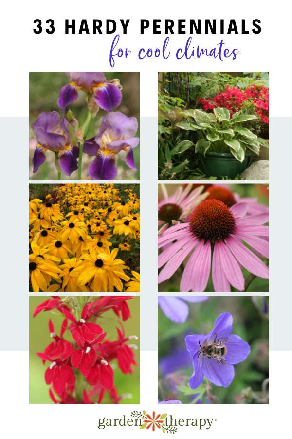 Super Hardy Perennials for Cool Climates