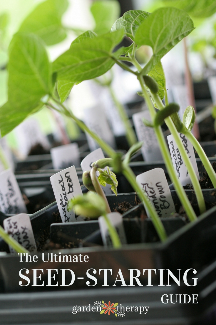 The ultimate seed-starting guide from Garden Therapy