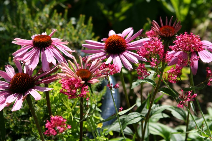 Perennials You Can Start From Seed