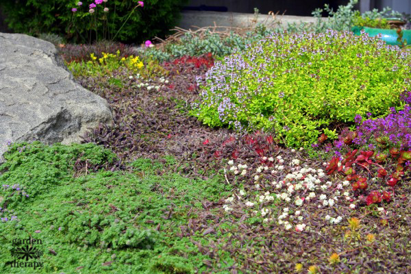 Carpet gardening with groundcovers