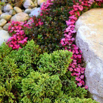 Carpet Gardening: Weaving Groundcovers into Low-Growing Art