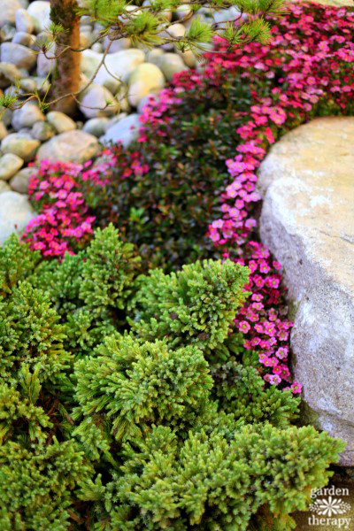 Creating garden interest with large boulders and low-growing plants