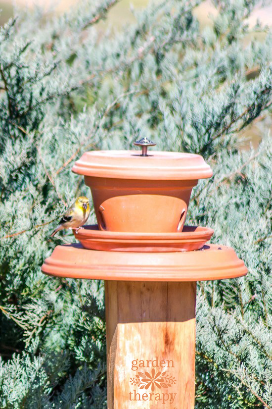 DIY Pedestal Flowerpot Bird Feeder