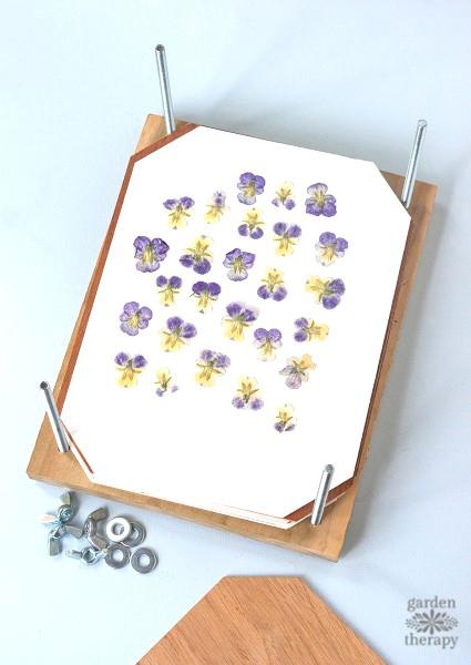 How to Make a Homemade Flower Press Step (6)