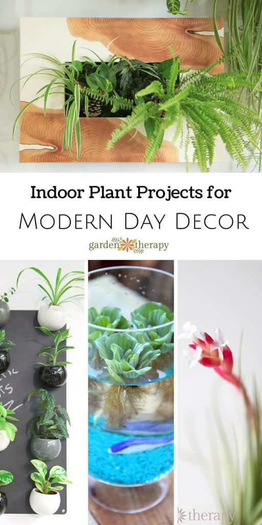 Playing with Houseplants for Indoor Garden Therapy - Garden