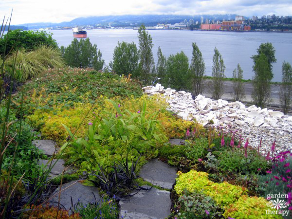 Oceanview drought tolerant green roof