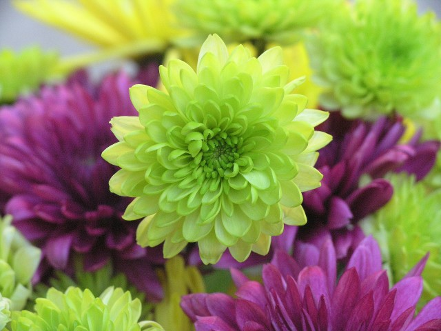 Say it With Flowers - what GREEN flowers mean