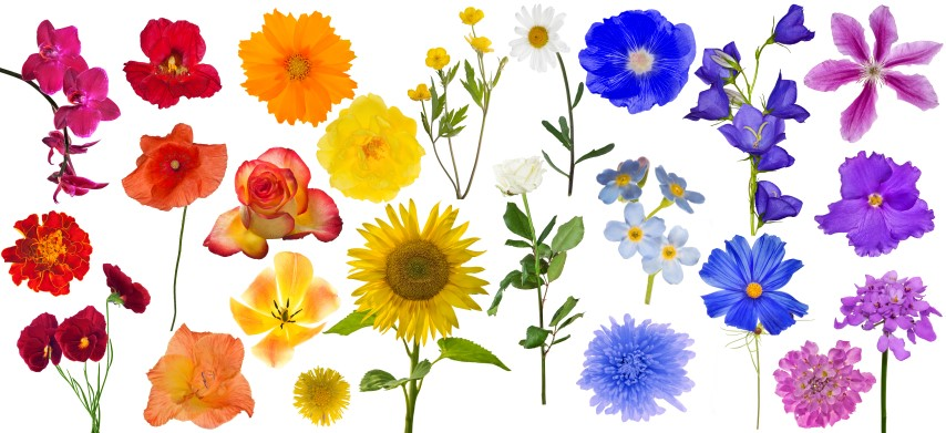What Does Flower Color Symbolize