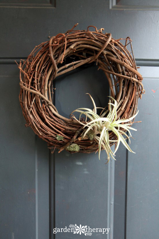 Air Plant Wreath BEFORE