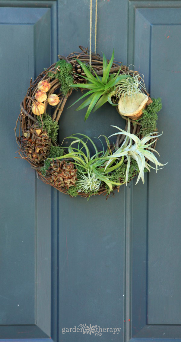 Air Plant Wreath Instructions