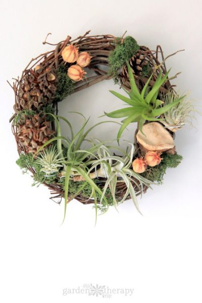Grapevine wreath with air plants on white background