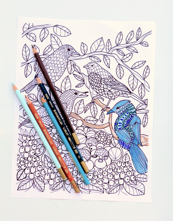 Birds and Berries from Garden Therapy Coloring Book