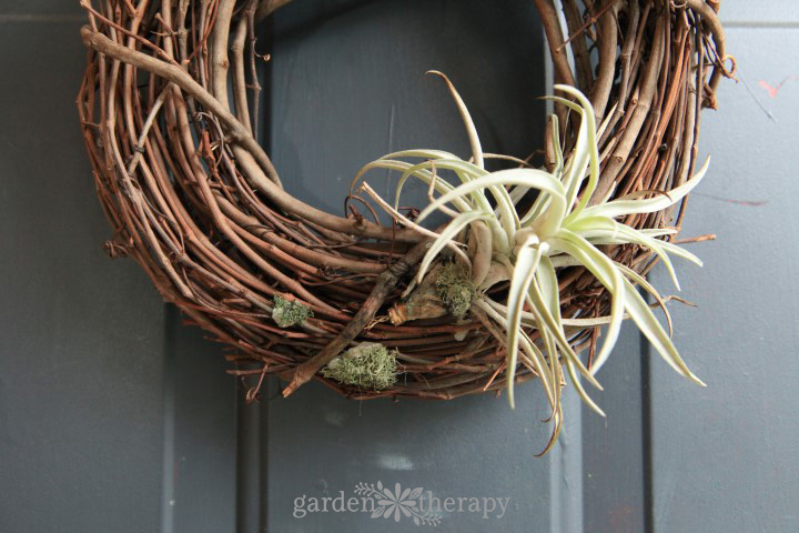 Dying Air Plant on Wreath