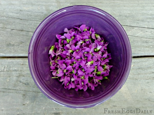Edible violets for making homemade soda syrup