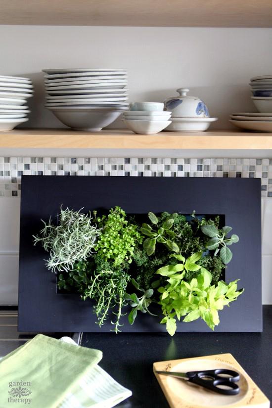 Finished Indoor Herb Garden