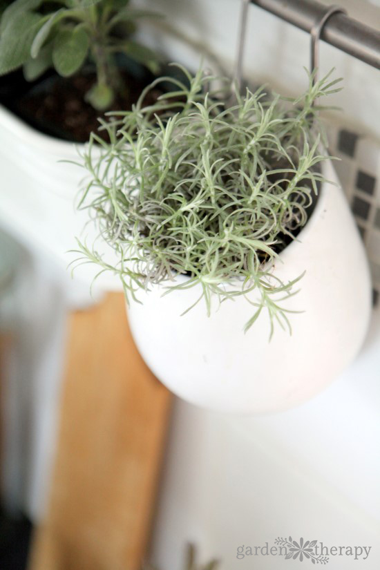 Growing Herbs Indoors - Dos and Donts