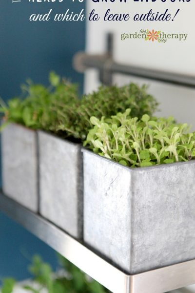 Which Herbs to Grow Indoors (and Which Ones NOT to)