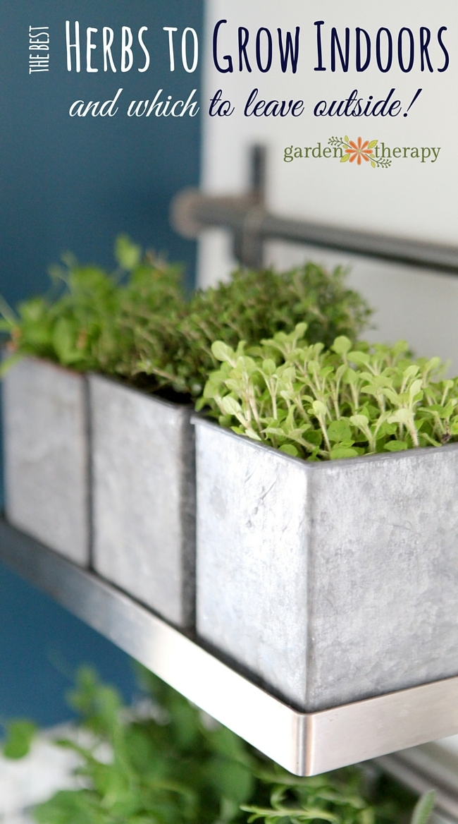 How To Grow Herbs Indoors So They Will Survive And Thrive