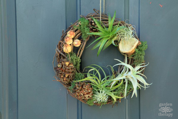 How To Make A DIY Air Plant Wreath Without Glue