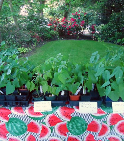 How to Plan a Plant Sale