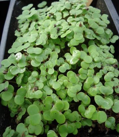 How to Start Seeds Like a Nursery Pro (2)