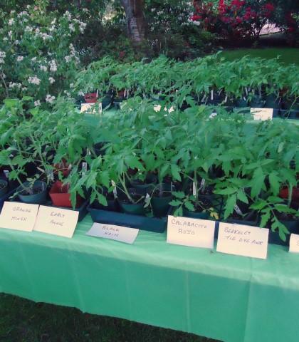 How to Start Seeds Like a Nursery Pro (3)